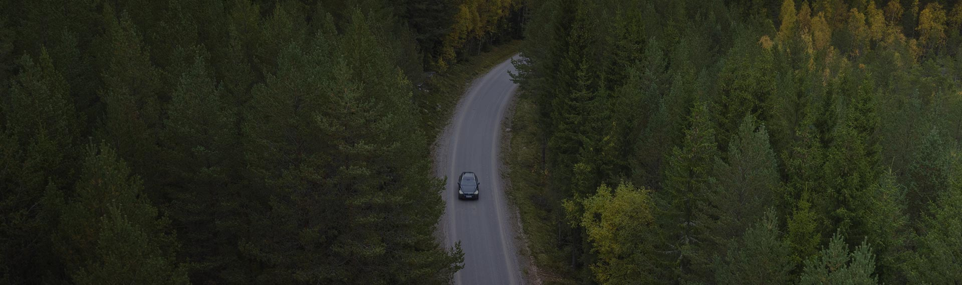 Car driving on a road in the forest