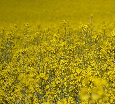 GreenCoat, hergestellt mit schwedischem Pflanzenöl