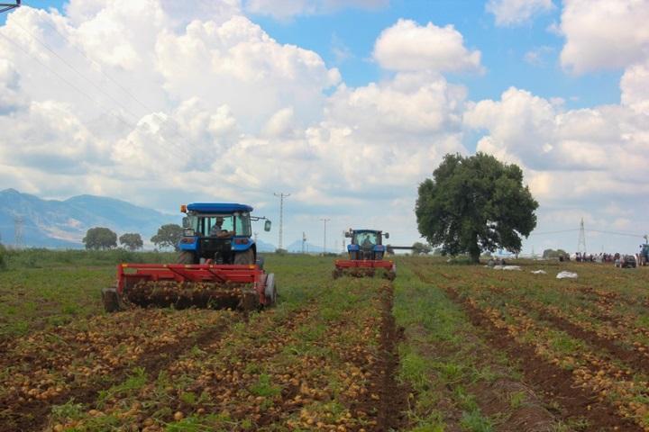 Lames sur une ramasseuse de pommes de terre dans un champ