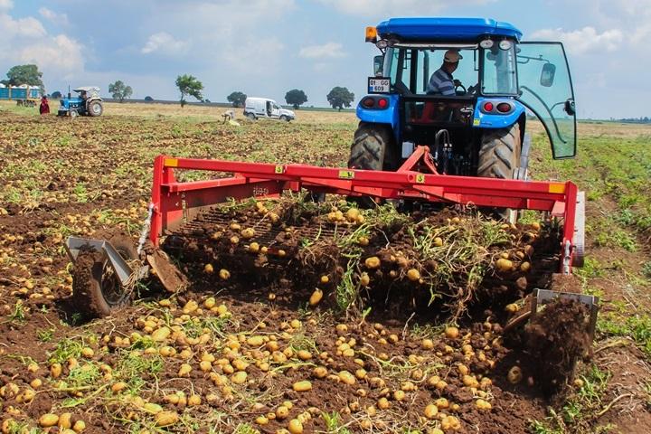 Une ramasseuse de pommes de terre à quatre rangées avec de l'acier anti-abrasion Hardox® dans ses lames